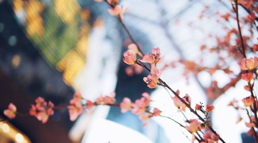 L'arrivo della Primavera ed il Ritorno delle Allergie